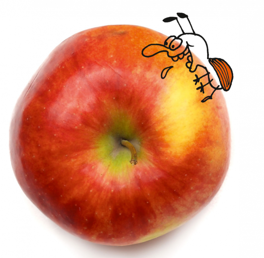 Tomber dans les pommes