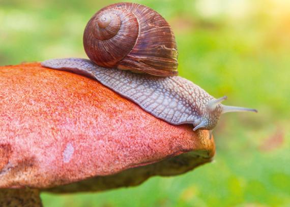 Escargot sur un champignon