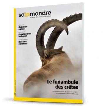 Les couvertures les plus marquantes de la revue La SalamandreLes couvertures les plus marqua
