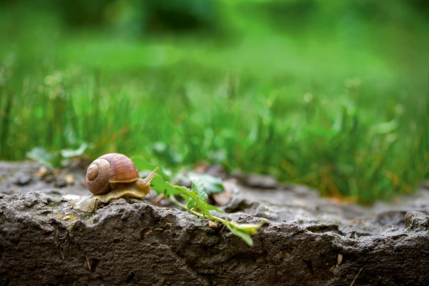 Dossier du petit escargot