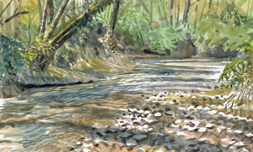 Les peintures des artistes naturalistes de la forêt des salamandres Sylvain Leparoux