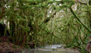 Berge moussue d'une rivière enchantée