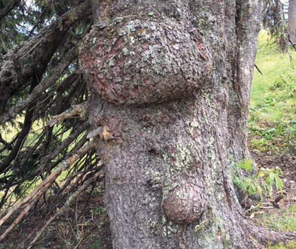 Boules sur les arbres