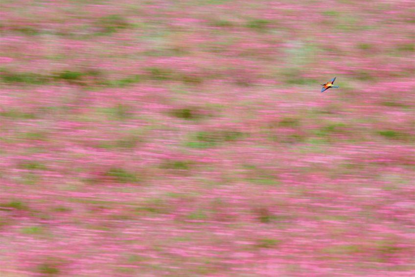 Concours photo de la station ornithologique suisse palmarès 2018