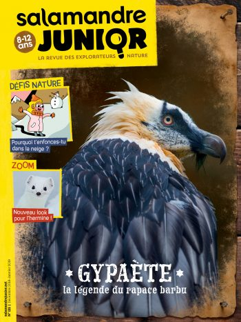 Couverture de La Salamandre Junior n°121