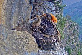 Jeune âgé de 3 mois / © PACT-andorra et Gouvernement d'Andorra (webcam)