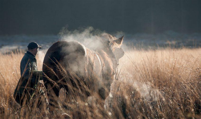 Le cheval de trait fait son retour en Belgique pour le débardage du bois.