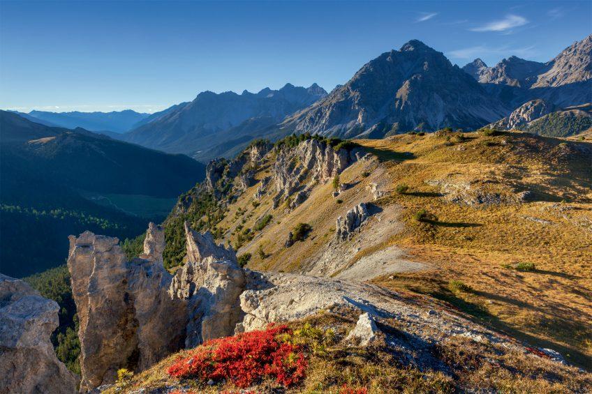 Chronique du retour du gypaète barbu dans les Alpes Suisse