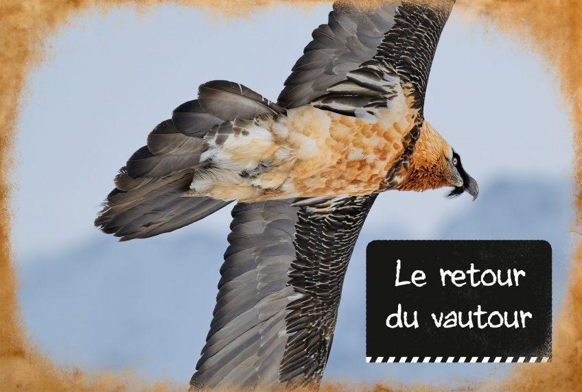 Le retour du vautour