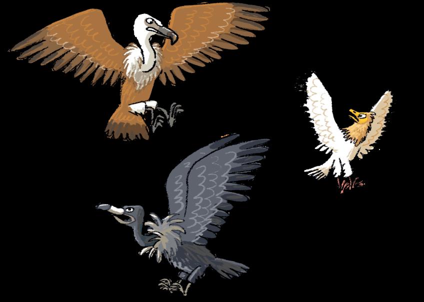 Le tour des vautours