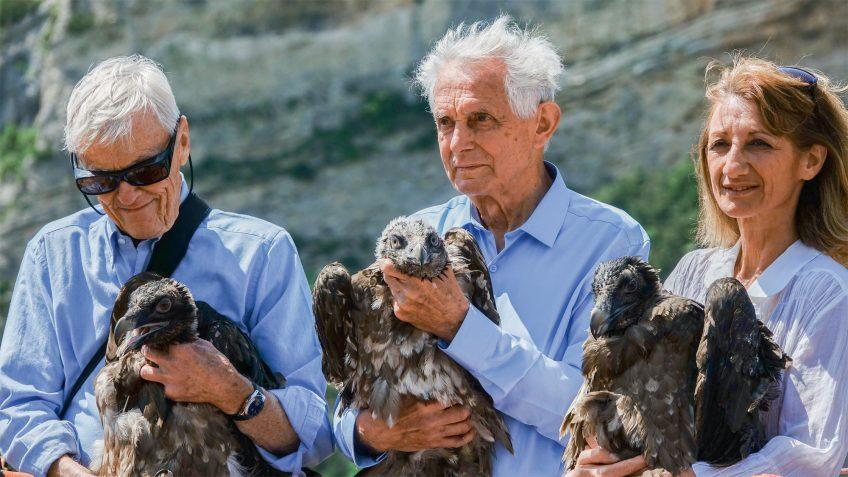 Des vautours sous son aile dans la Drôme