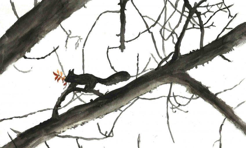 Ecureuils les voisins électriques - La Salamandre