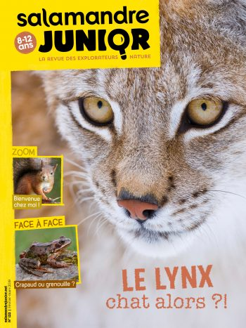 Couverture de La Salamandre Junior n°122