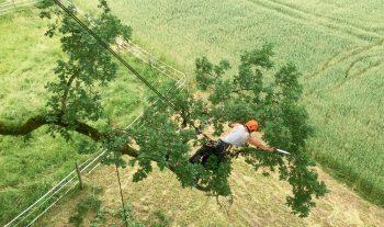 Des arboristes pour le grand capricorne - #1
