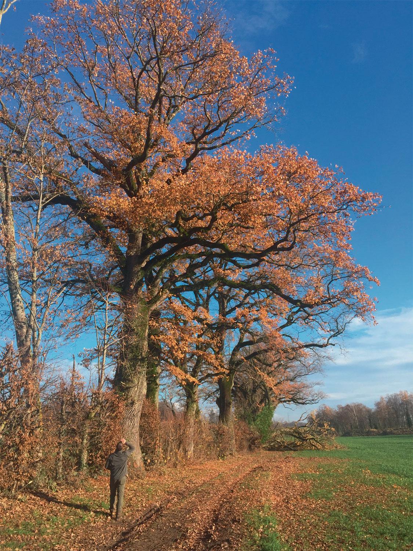 Des arboristes pour le grand capricorne