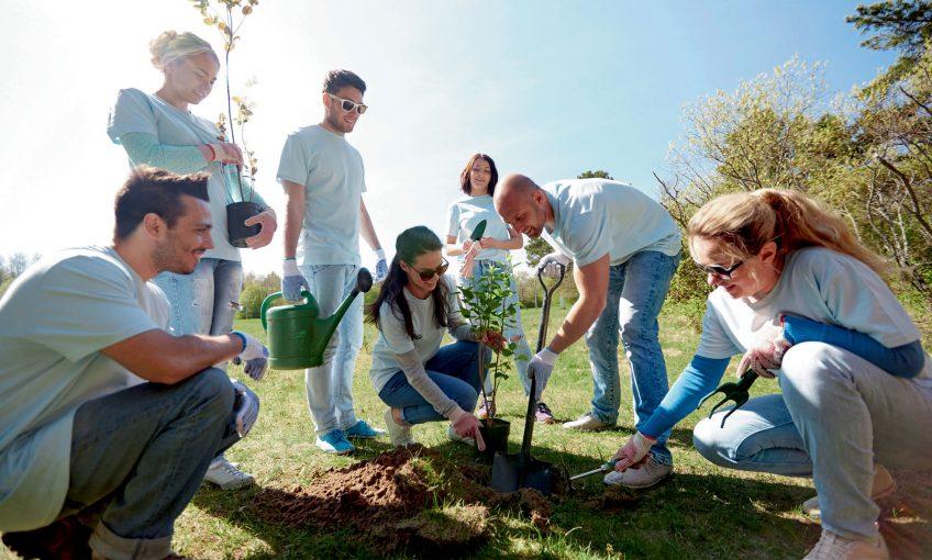 La Salamandre plante 250 arbres et vous encourage à faire de même