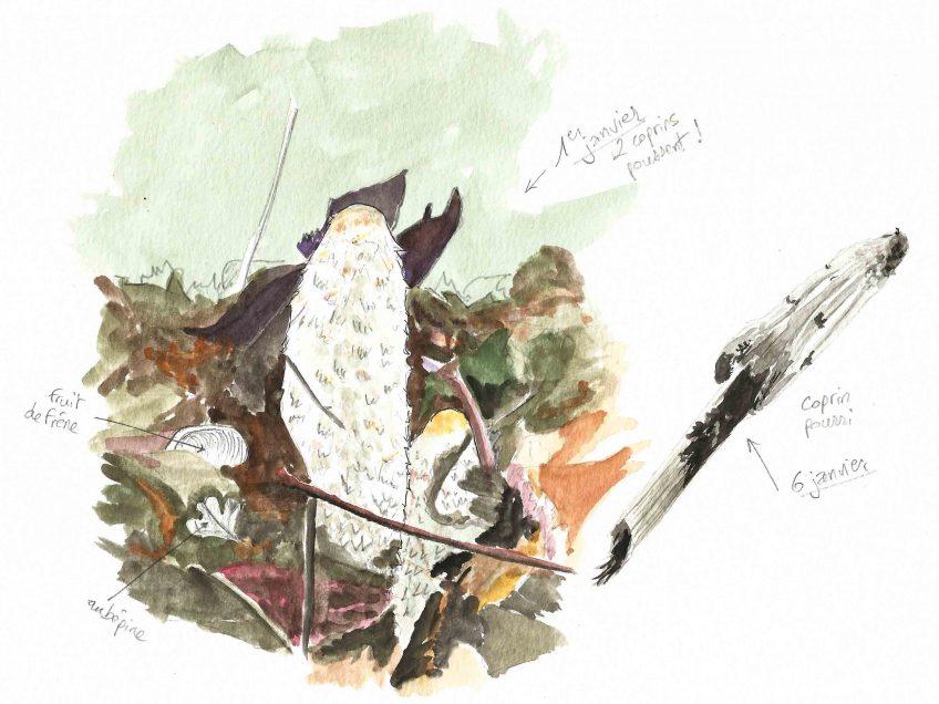 Nouvel an avec les champignons coprins - La Salamandre