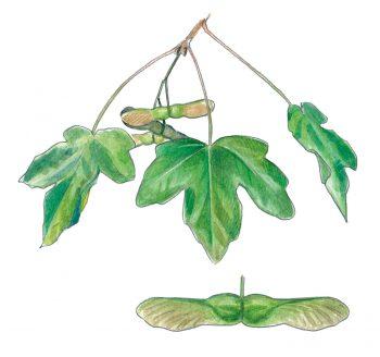 Le top 10 des arbres à planter dans son jardinLe top 10 des arbres à planter dans son jardin