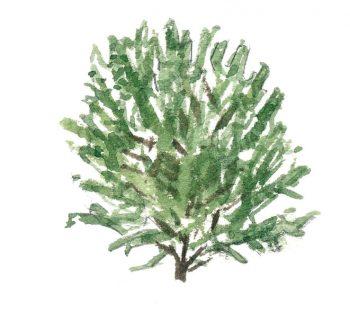 Top 10 des arbres à planter dans son jardin et leurs conseils de plantation