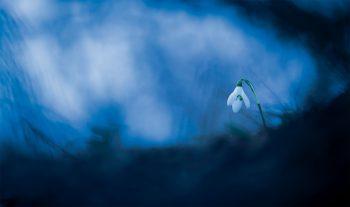 Perce-neige Causse Méjean (Lozère) le 21 mars2018 à 19h34