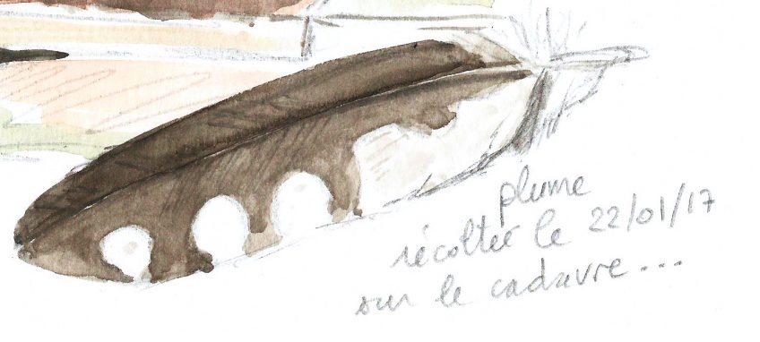 En mémoire de la chouette chevêche - La Salamandre