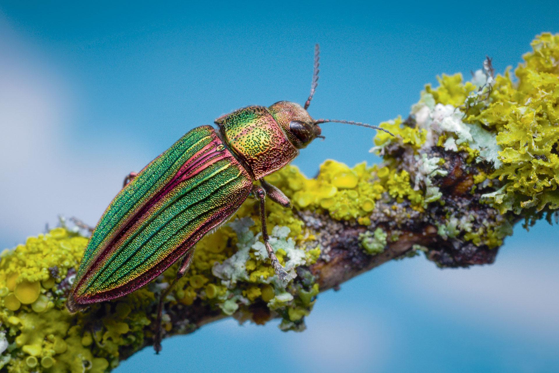 Quel insecte vit le plus longtemps ?