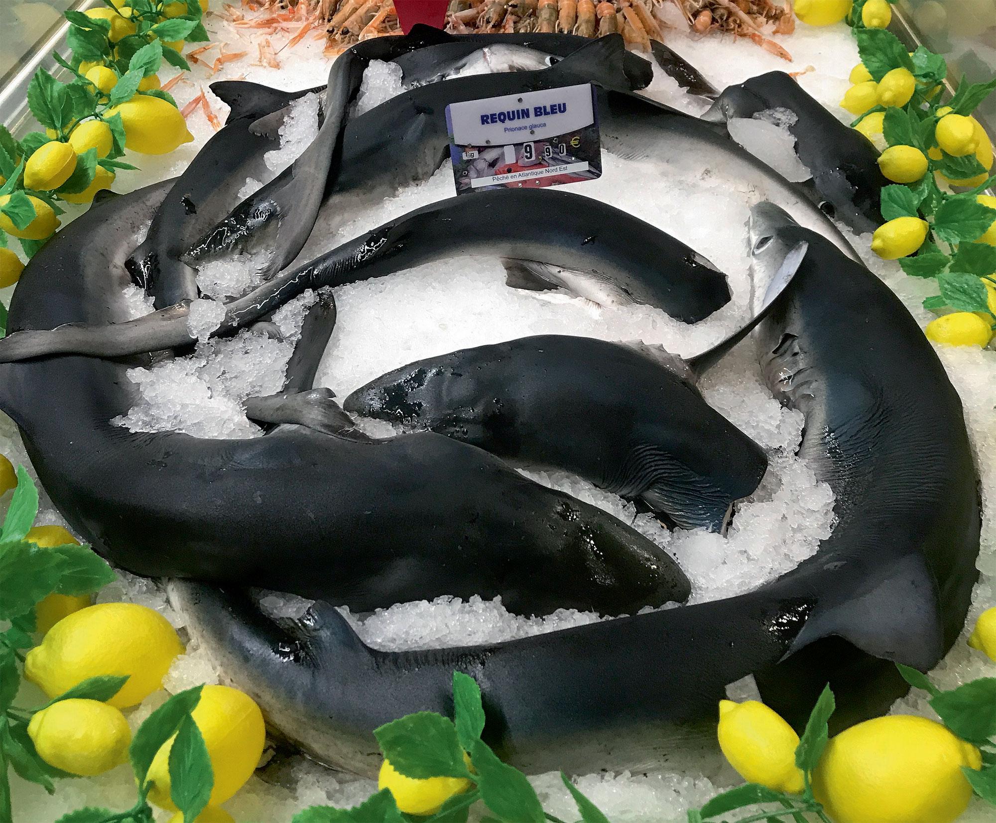 Il faut se battre contre un monde sans requins