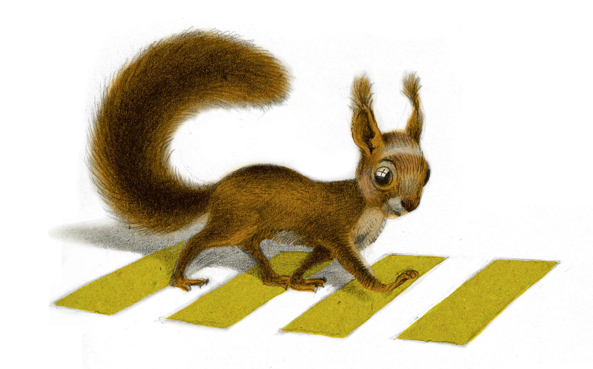 L'écuroduc : un pont pour sauver les écureuils