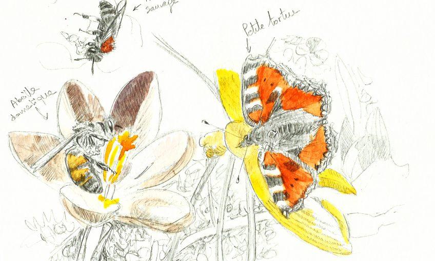 Menu crocus pour les abeilles - La Salamandre