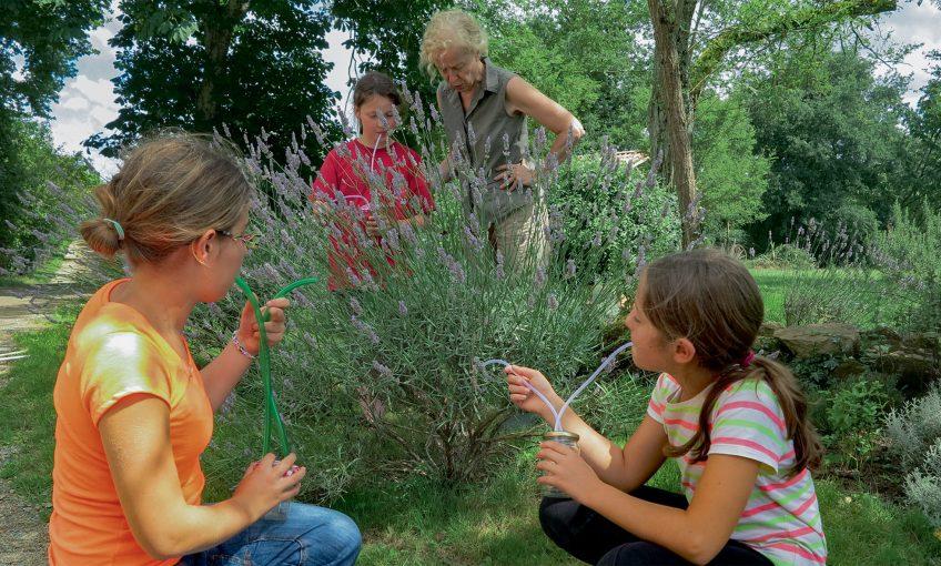 Comment fabriquer un aspirateur pour observer les insectes ?
