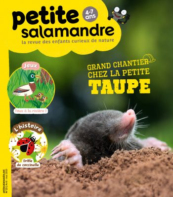 Couverture de La Petite Salamandre n°23