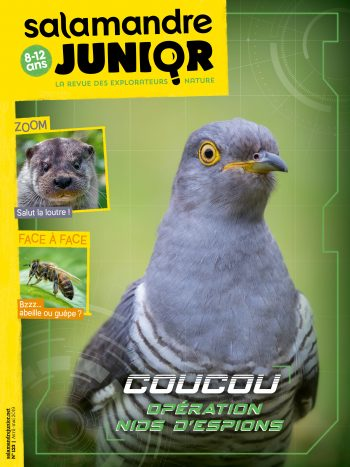 Couverture de La Salamandre Junior n°123