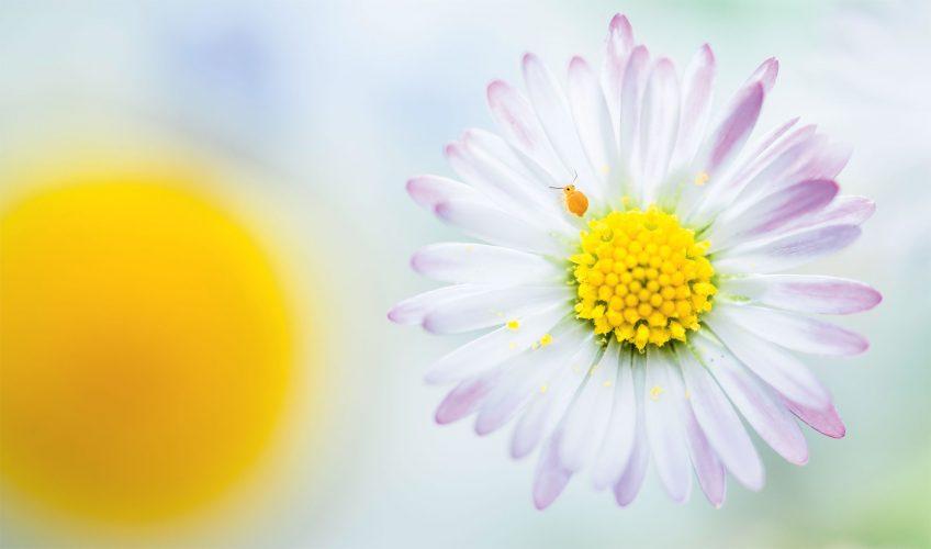 De la joie dans ces photos de la nature au printemps d'Etienne Francey