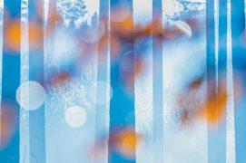 «Les multiples lignes verticales de la forêt offrent un rendu graphique intéressant. Je cadre entre les feuilles mortes couvertes de gouttes d'eau.» / © Etienne Francey