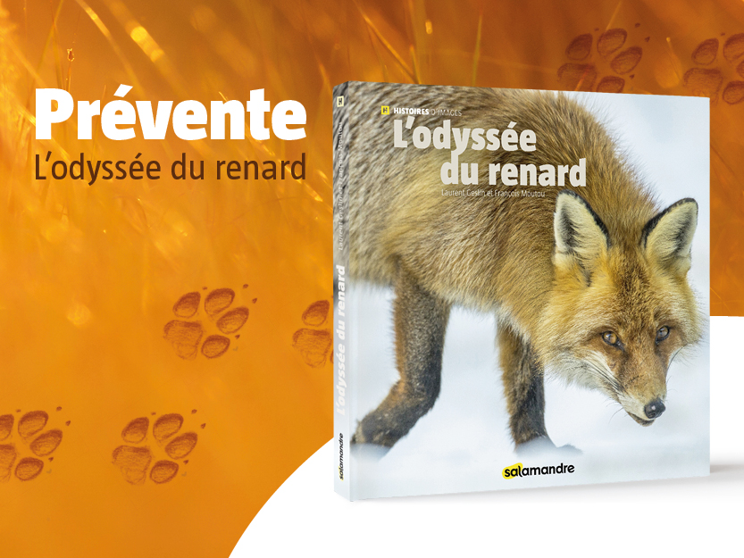 Prévente L'odyssée du renard