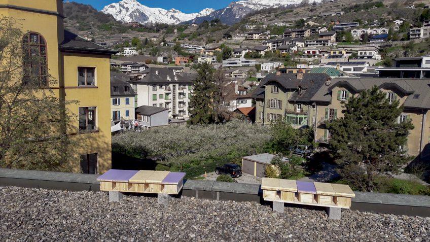 Nichoirs à martinets sur le toit d'un batiment