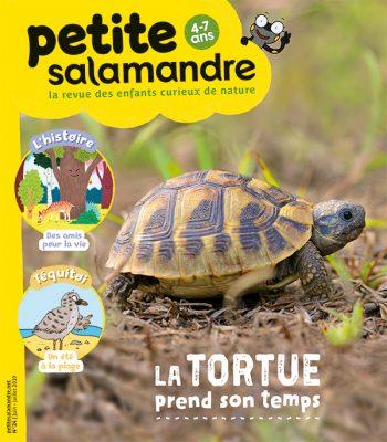 La petite salamandre - la tortue d'Hermann
