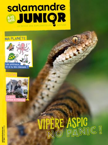 Couverture de La Salamandre Junior n°124