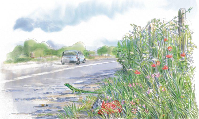 Explorez la biodiversité insoupçonnées des bords de route