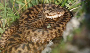 snake-3582363