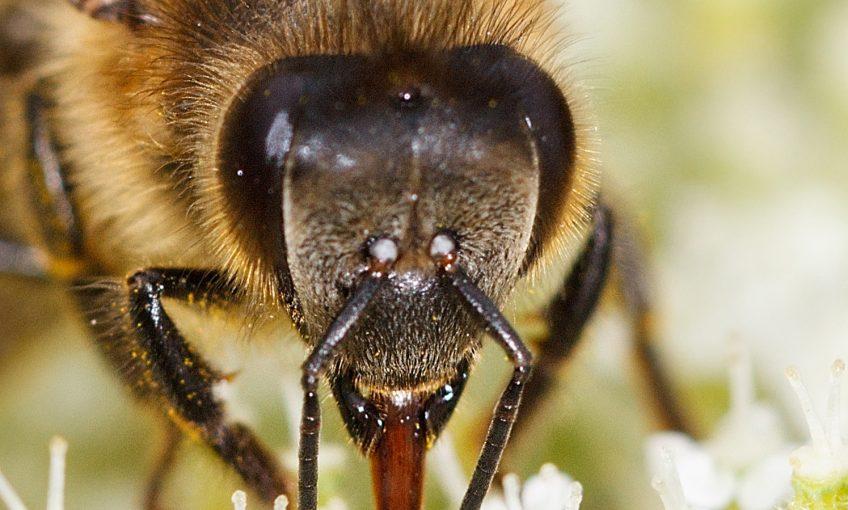Insectes : comment voient-ils et quelles couleurs ?