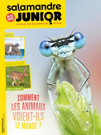 Couverture de La Salamandre Junior n°125