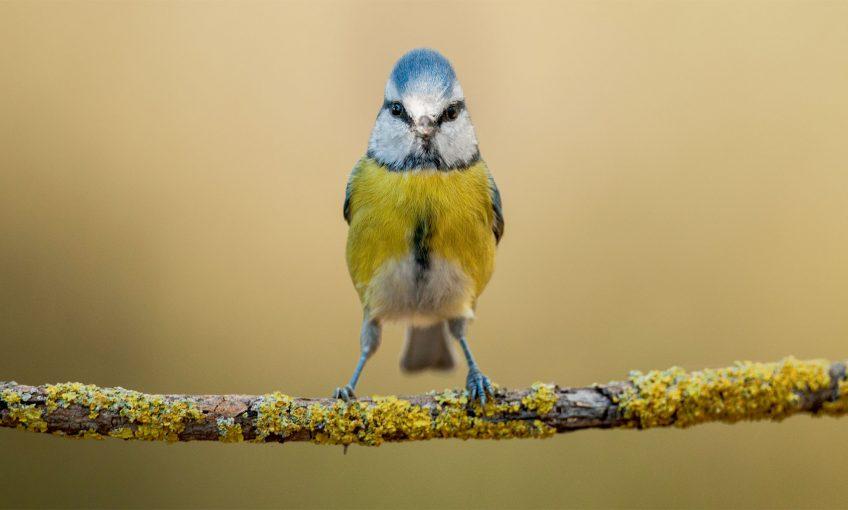 Certains poissons et oiseaux voient une couleur de plus que les humains