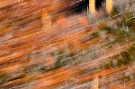 Flammes jaunes - Pyrénées centrales. / © Carole Reboul