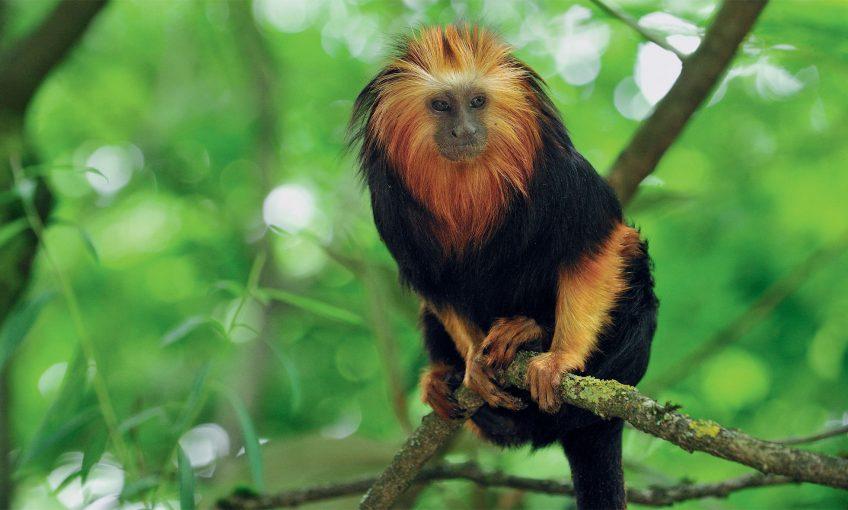Mammifères : Les primates ont la meilleure vision d'entre tous