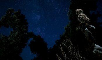 Chevêche dans la nuit