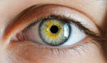 œil humain