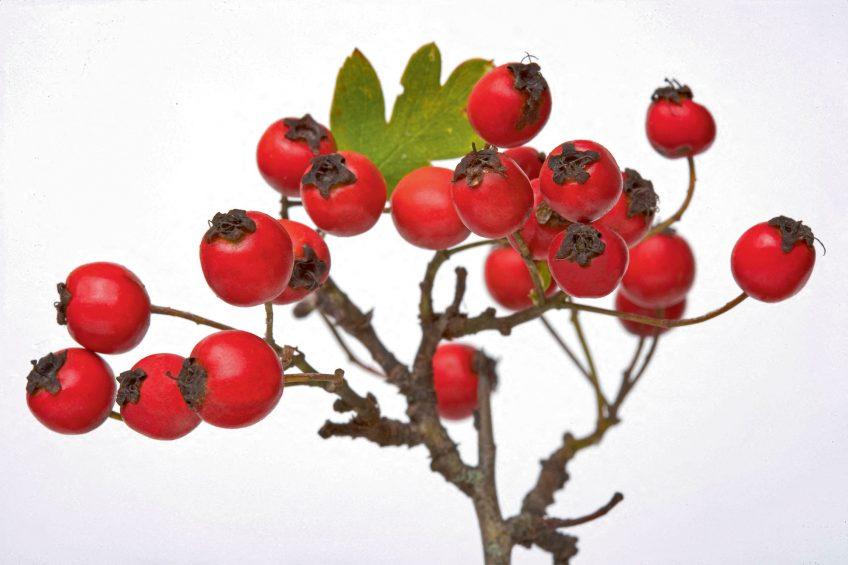Le rouge dans la nature chez les oiseaux, les plantes et les insectes