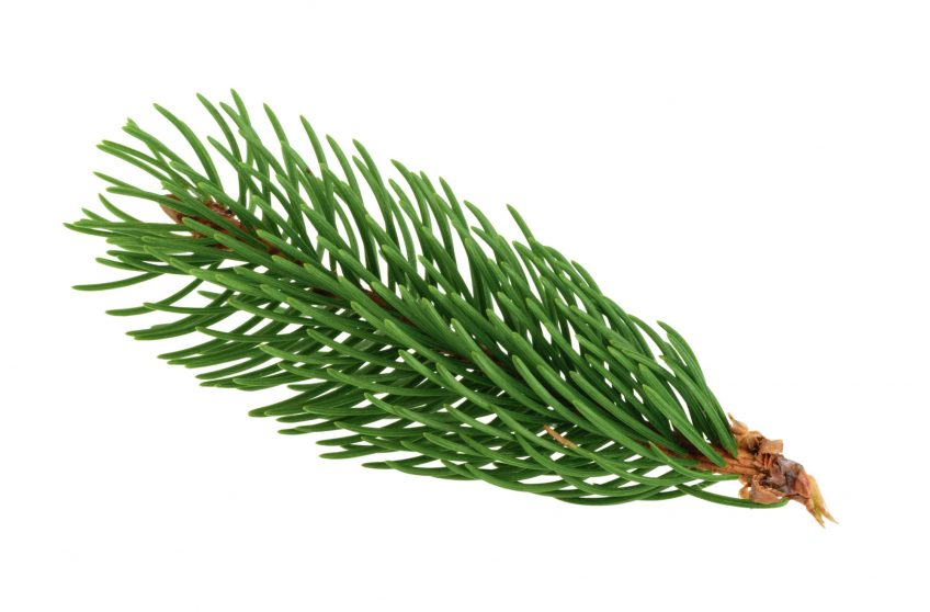 Vert, couleur des végétaux et des animaux qui s'y camouflent