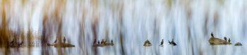 Le-lac-aux-oiseaux-header